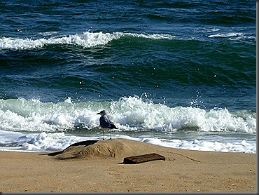 VIRGINIA BEACH PHOTOS 2008 171